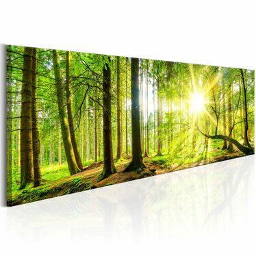 Obraz - Majestic Trees 135x45 cm
