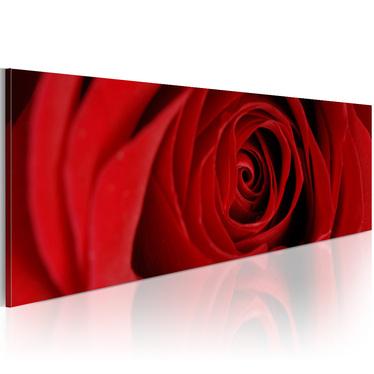Obraz - Róża północy 120x40 cm