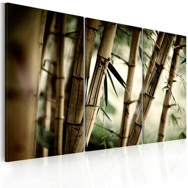 Obraz - W tropikalnym lesie 60x40 cm