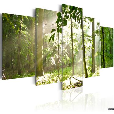Obraz - Promień światła pośród drzew 100x50 cm