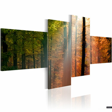 Obraz - Promyki słońca pośród drzew 100x45 cm