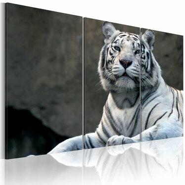 Obraz - Biały tygrys  120x80 cm
