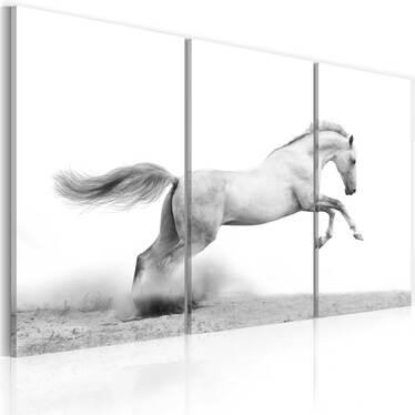 Obraz - Koń w galopie 120x80 cm