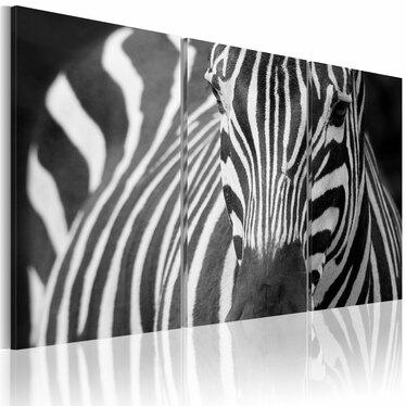 Obraz - Pani Zebra 120x80 cm
