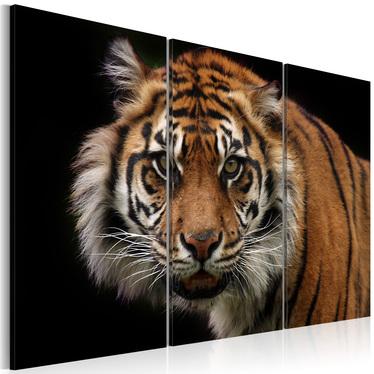 Obraz - Drapieżny tygrys 120x80 cm