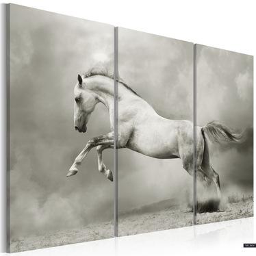 Obraz - Biały koń w ruchu 120x80 cm