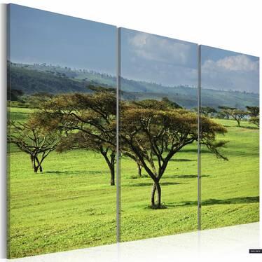 Obraz - Afrykańskie akacje 120x80 cm