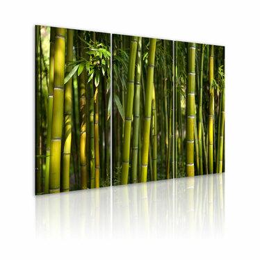 Obraz - Bambus i zieleń 60x40 cm
