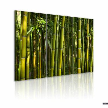 Obraz - Bambus i zieleń 120x80 cm