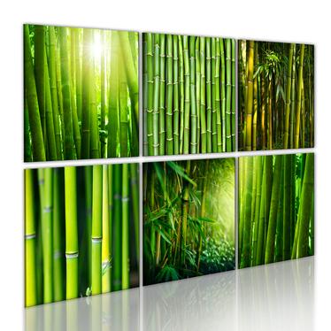 Obraz - Bambus w kilku odsłonach 120x80 cm