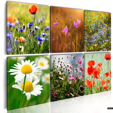 Obraz - Łąka tysiąca kolorów 60x40 cm