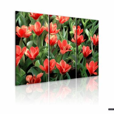 Obraz - Czerwone tulipany w rozkwicie 120x80 cm