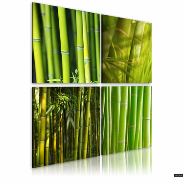 Obraz - Bambusy 40x40 cm