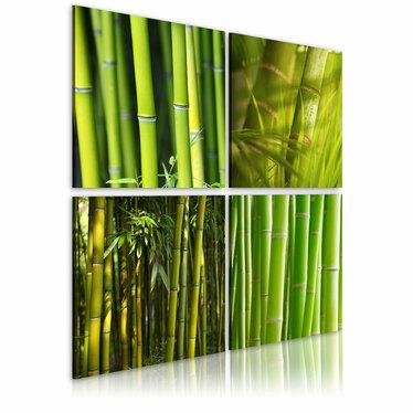 Obraz - Bambusy 80x80 cm