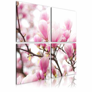 Obraz - Kwitnące drzewo magnolii 80x80 cm
