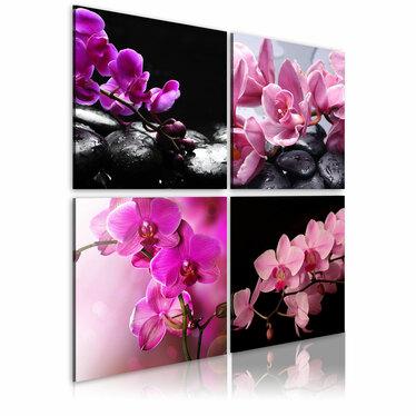Obraz - Orchidee piękniejsze niż kiedykolwiek 80x80 cm