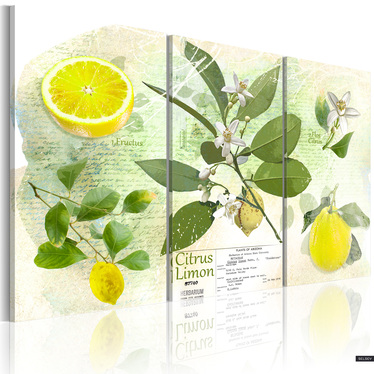 Obraz - Owoc: cytryna 60x40 cm