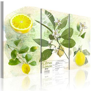 Obraz - Owoc: cytryna 120x80 cm