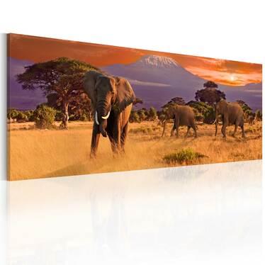 Obraz - Marsz afrykańskich słoni 120x40 cm