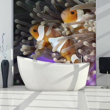Fototapeta Błazenki – ryby klowny