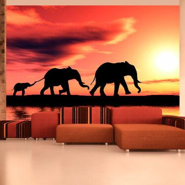 Fototapeta słonie: rodzina