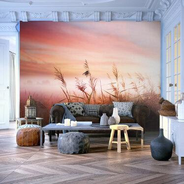 Fototapeta - Łąka o świcie 200x154 cm